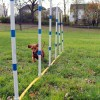 Dog Agility on the Farm