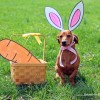 Happy Easter Furiends!