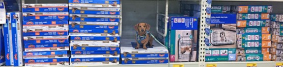 Tips for Crate Training Your Adult Dog #CrateHappyPets