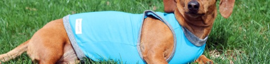Penn + Pooch Spring Pet Clothing Review & Giveaway