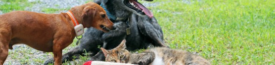 When Dogs & Cats Play