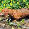 End of Summer Harvests + Limited Ingredient Diets for Dogs