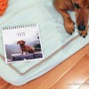 New in the Shop! Ammo the Dachshund's 2016 Calendar