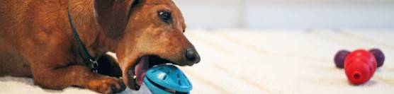 Treat Dispensing Toys for Dogs