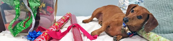 Dog Days of Cheer! Wrapping Presents