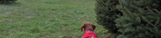 Dog Days of Cheer! Christmas Tree Shopping