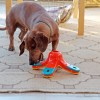 Toys for Smart Dogs