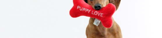 Valentines Day Gift Guide For Dogs