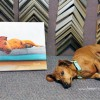 Affordable Pet Portraits + A Giveaway