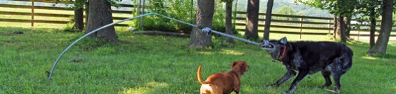 A Tether Tug Toy for Tough Dogs + A Giveaway
