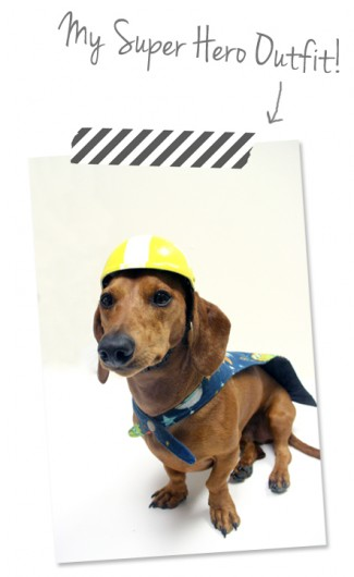 ammo the dachshund super hero