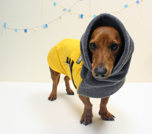 ammo the dachshund k9 voyagers coat
