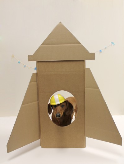 ammo the dachshund goes to the moon