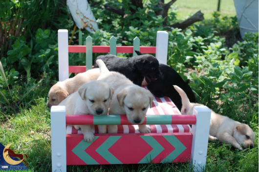 ponypup beds