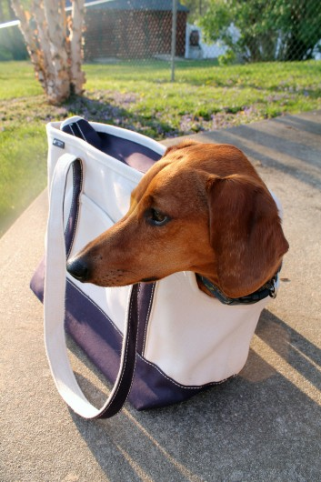 lands end dog tote