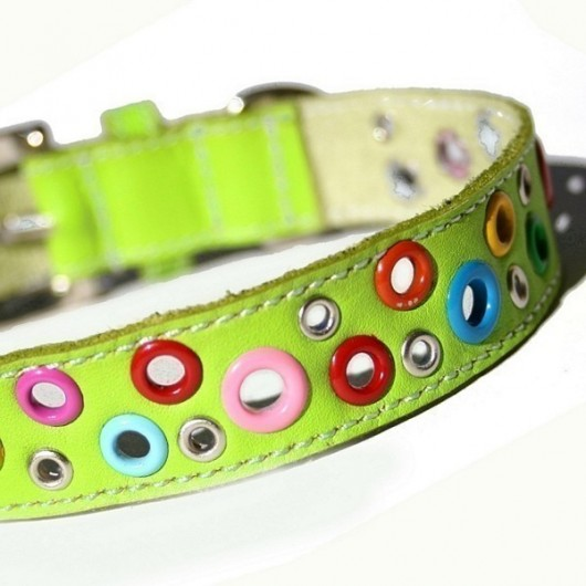 the cool puppy collar