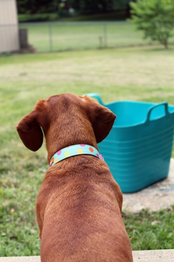 DIY Ombre Pet Bandana via Ammo the Dachshund