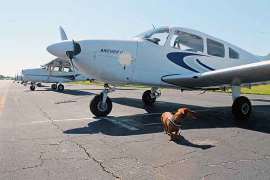 Ammo the Dachshund takes Flight - Adventures in taking a Small Dog Flying in a Piper