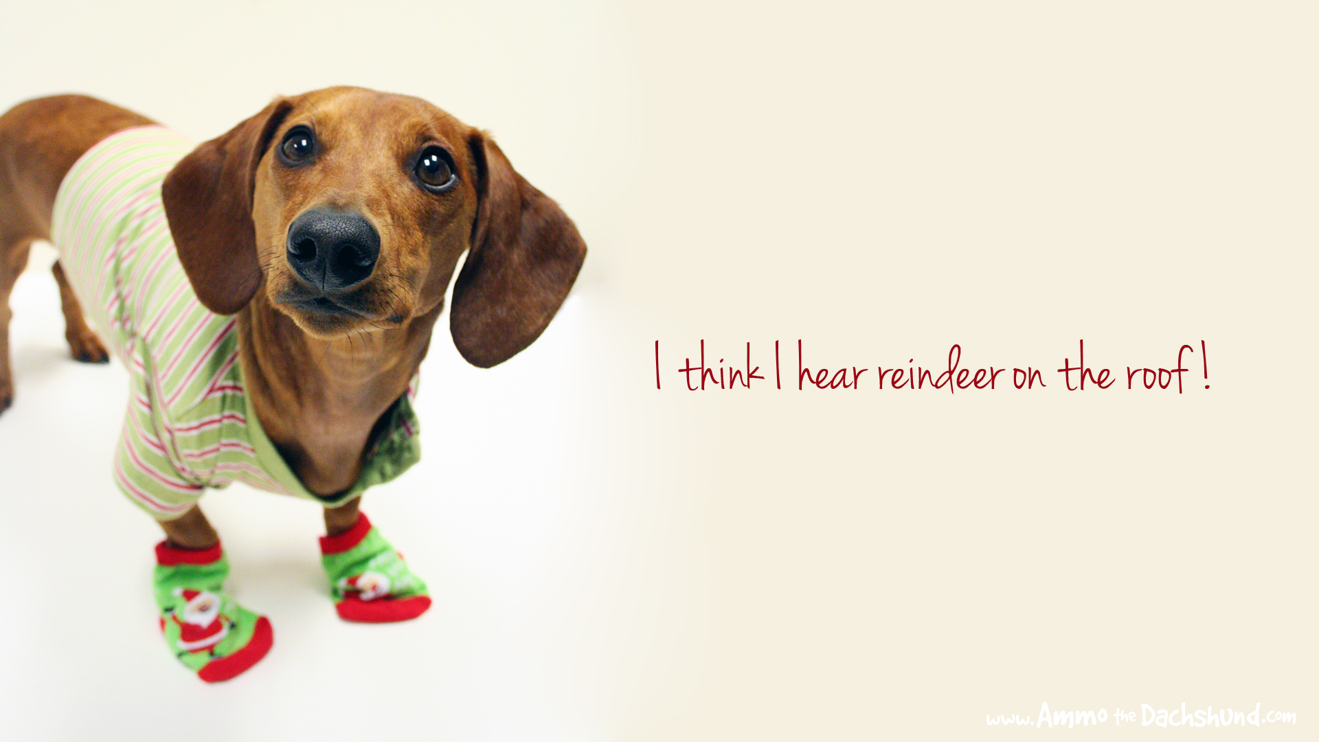 12 days of cheer! free holiday desktop wallpaper | ammo the dachshund