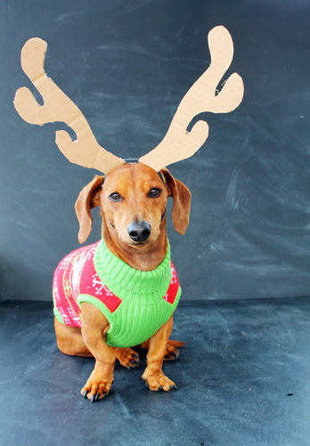 Ammo the Dachshund // Christmas Cheer // Bullseye the Target Dog