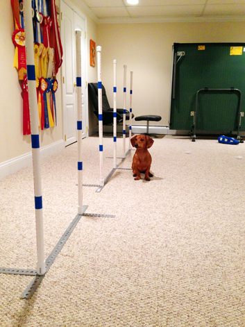 DIY 2x2 Dog Agility Weave Poles // Ammo the Dachshund