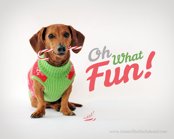 Ammo's Free Holiday Desktop Wallpaper // Oh What Fun // Ammo the Dachshund