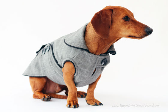 Noodle and Friends Executive Coat Product Review // Ammo the Dachshund