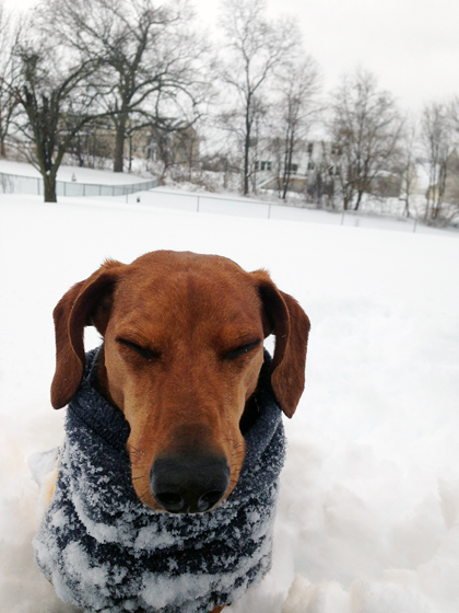 2014 Blizzard with Ammo the Dachshund