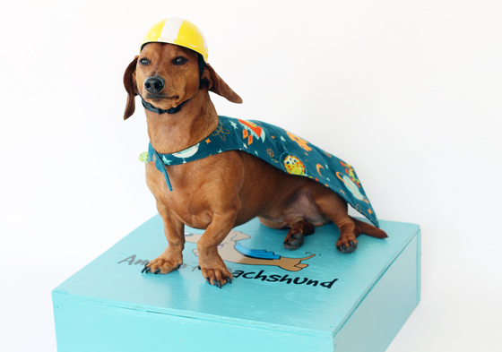 Ammo the Dachshund's Trick Box