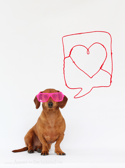 Happy Valentine's Day // Ammo the Dachshund