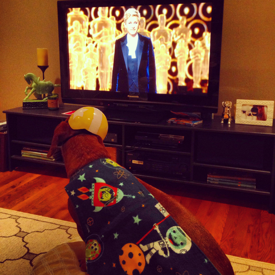 Oscars 2014 // Ammo the Dachshund