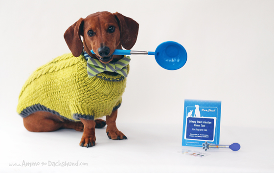 PawCheck At-Home Pet Wellness Kit Review & Giveaway // Ammo the Dachshund