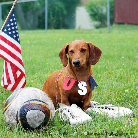 World Cup Soccer // Ammo the Dachshund // Team USA