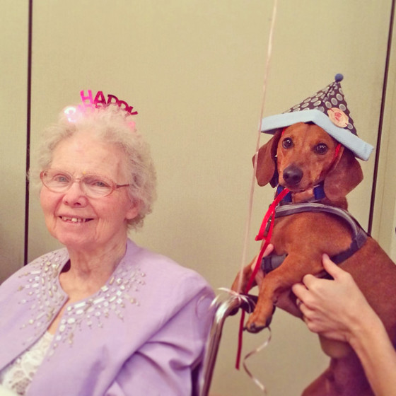 Super Mom-Mom's 90th Birthday // Ammo the Dachshund