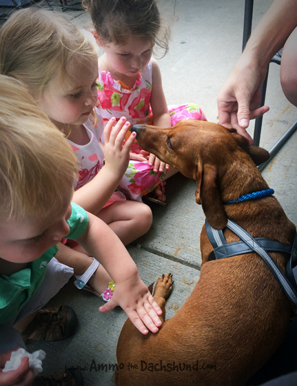 Kid Magnet // Ammo the Dachshund