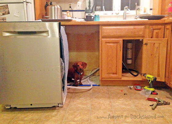 Clean Plate Club // Kitchen Remodel // Ammo the Dachshund