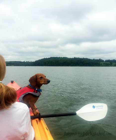 Lake Dogs // Summer // Ammo the Dachshund
