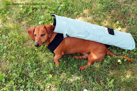 Park It Mat Review & Giveaway // Peach Industries // Ammo the Dachshund