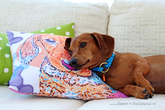 Watercolor Dachshund Pillow Review & Giveaway // Ammo the Dachshund