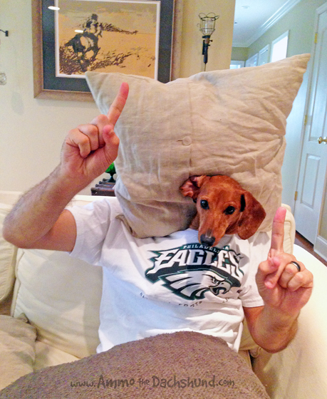 Sunday Night Football Goes to the Dogs // Ammo the Dachshund