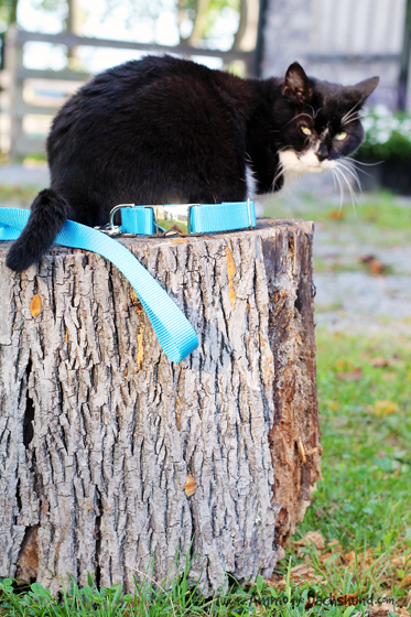 Mattie & Margot Stripped Collar and Leash Review & Giveaway // Ammo the Dachshund