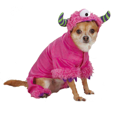 10 Easy Halloween Costumes for Pets // Ammo the Dachshund