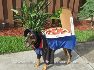 10 Handmade Halloween Costumes for Dogs // Ammo the Dachshund