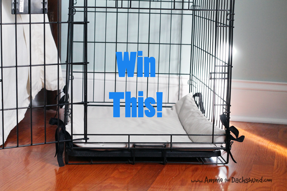 Kentucky Bluebird Kennel Bed Review & Giveaway // Ammo the Dachshund