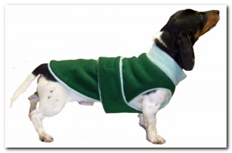 10 Fall Sweaters that Fit Dachshunds | Ammo the Dachshund