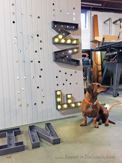 Studio 3 Marquee Sign // Ammo the Dachshund