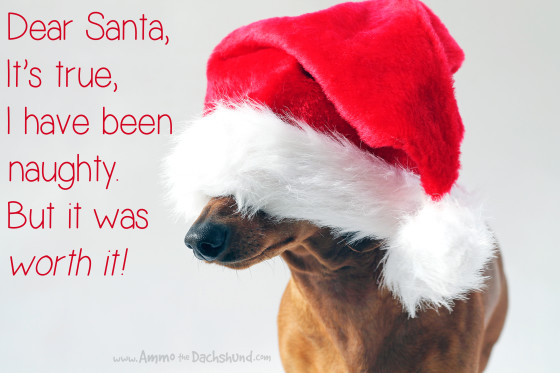 12 Days of Cheer! Merry Christmas from Ammo the Dachshund