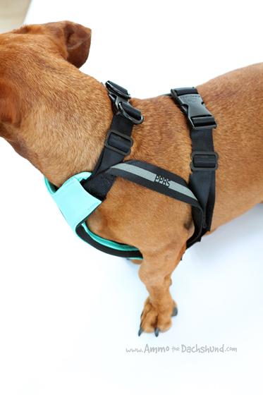 Sleepypod Clickit Sport review & giveaway // Ammo the Dachshund