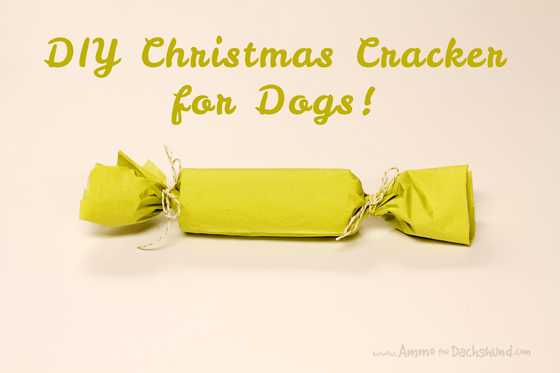 12 Days of Cheer! DIY Christmas Cracker for Dogs // Ammo the Dachshund
