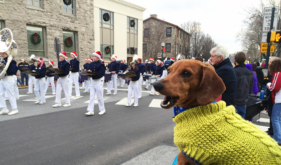 12 Days of Cheer! Annual Christmas Parade // Ammo the Dachshund